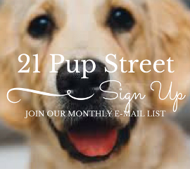 21-pup-street-email-sign-up