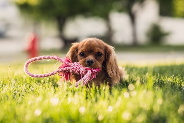 dog-with-rope