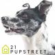 21-pupstreet-logo