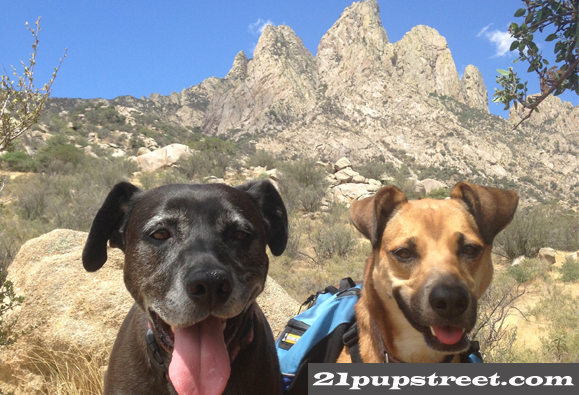 dogs-organ-mountains