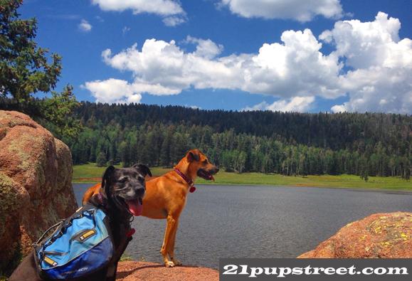 dogs-san-pedro-parks