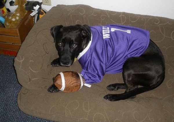 black-dog-football-jersey