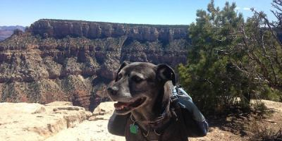 black-dog-grand-canyon-south-rim