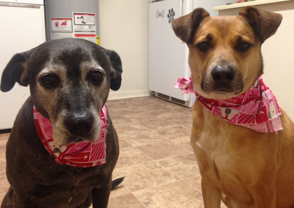 dogs-valentines-day-bandannas