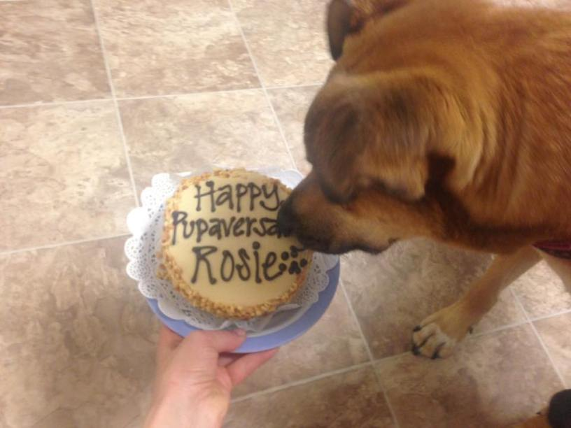 dog-cake
