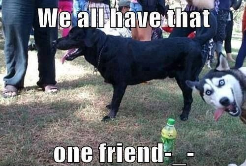 funny-dog-meme-we-all-have-that-one-friend