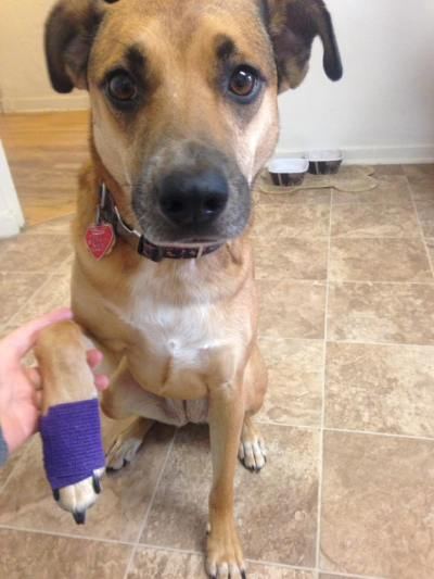 Dog-bandage-on-foot