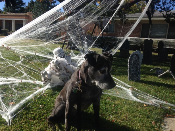 dog-halloween-decorations