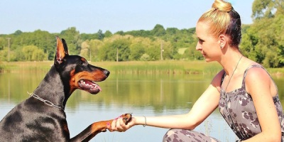 doberman-hand-shake-dog