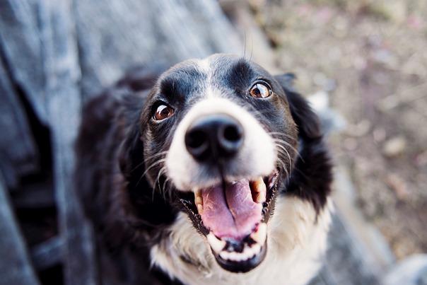 black-and-white-dog