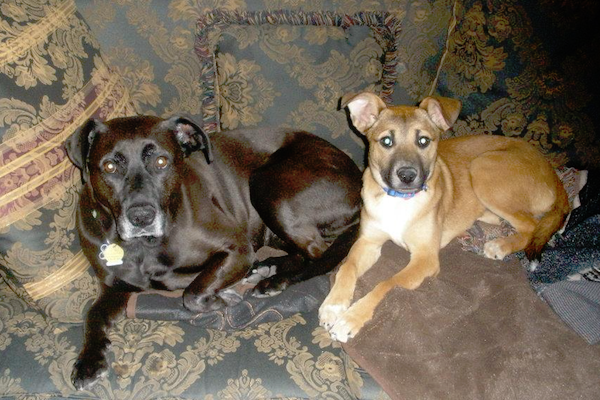 rosie-and-daisy-sitting-on-couch
