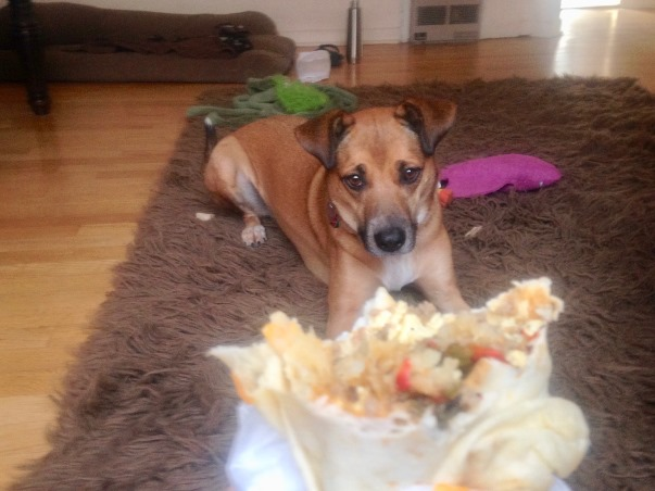 dog-begging-burrito-2