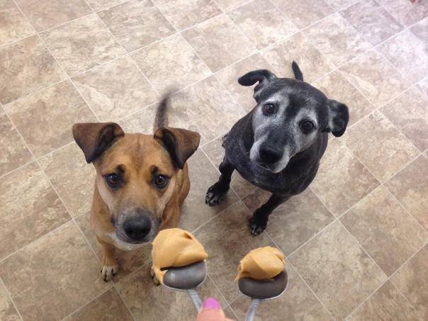 dogs-peanut-butter