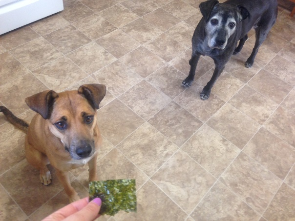 dog-begging-seaweed