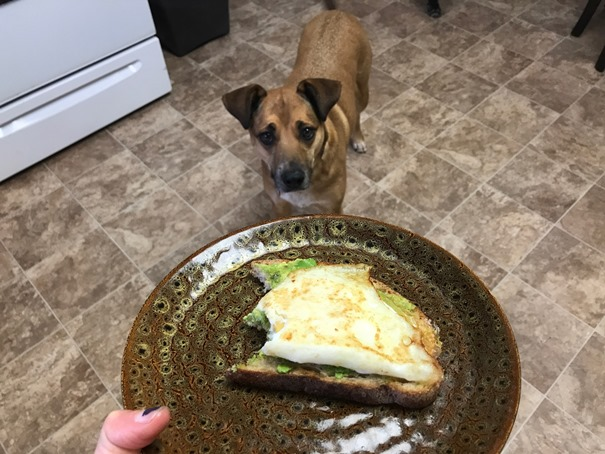dog-begging-sandwich
