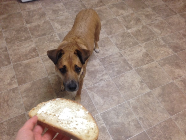 dog-begging-toast