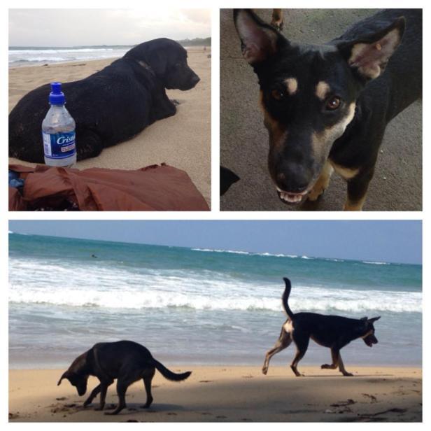 Beach Dogs Puerto Viejo